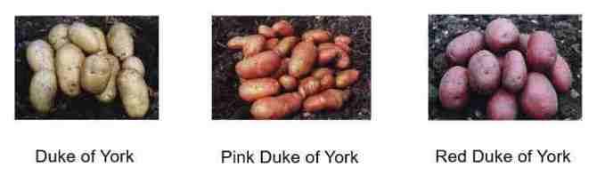 Three poatoes